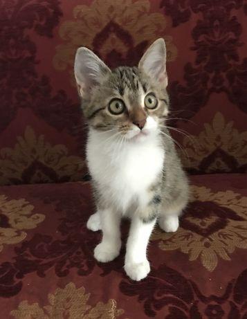 Котенок кошка, 3,5 месяца