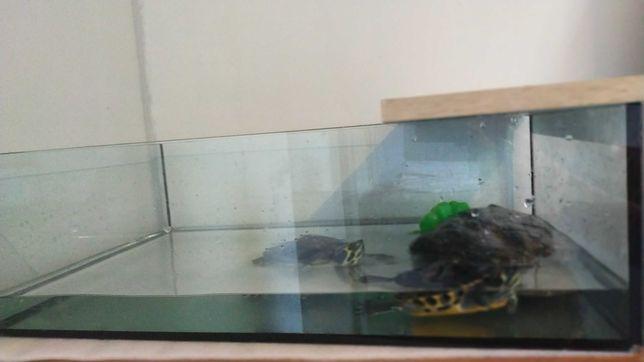 Akwarium + żółwie