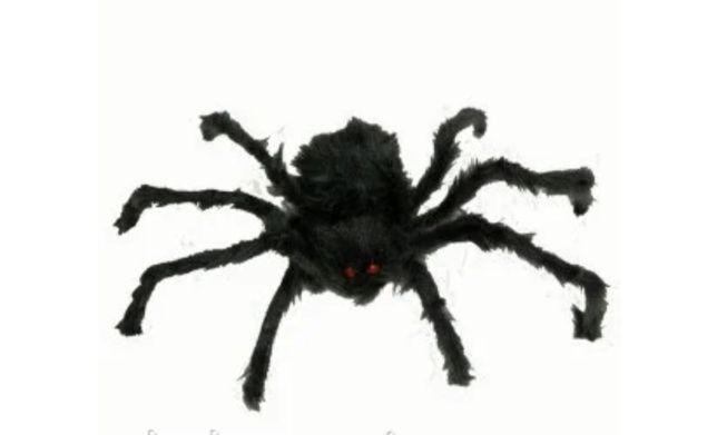 Продам большого мохнатого паука
