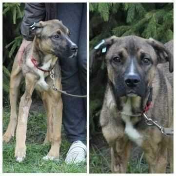 Пес Рокки, возраст до года, активная и ласковая собака