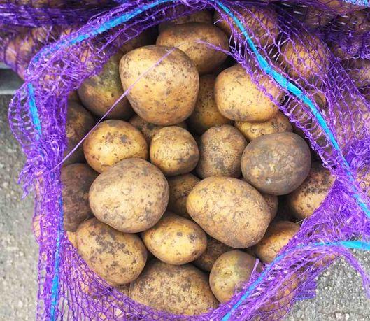 Картофель посадочный Немецкий Тоскана