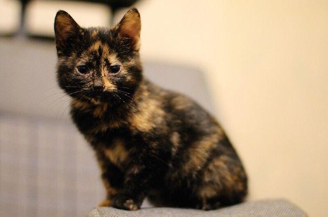 Чудесный котенок, в добрые руки