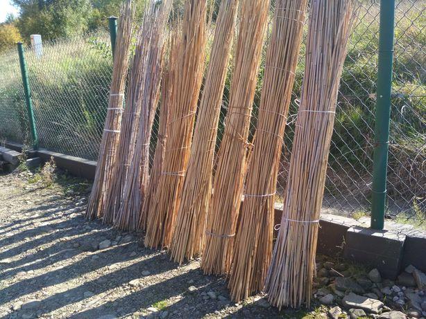 Bambus paliki tyczki