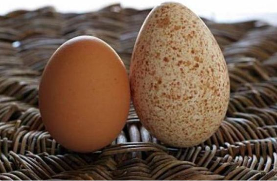 Яйця різних порід