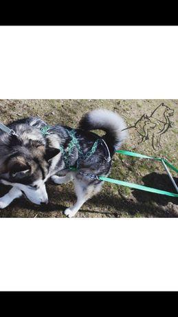 Шлейка универсальная для собаки грузовая + ездовая