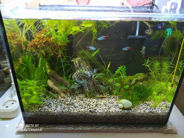 Продам аквариум 35 л с крышкой, грунт и растения
