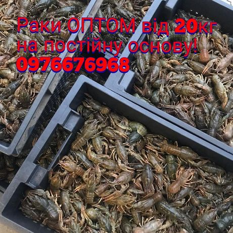 Раки ОПТ Оптові поставки раків від 20кг Раки