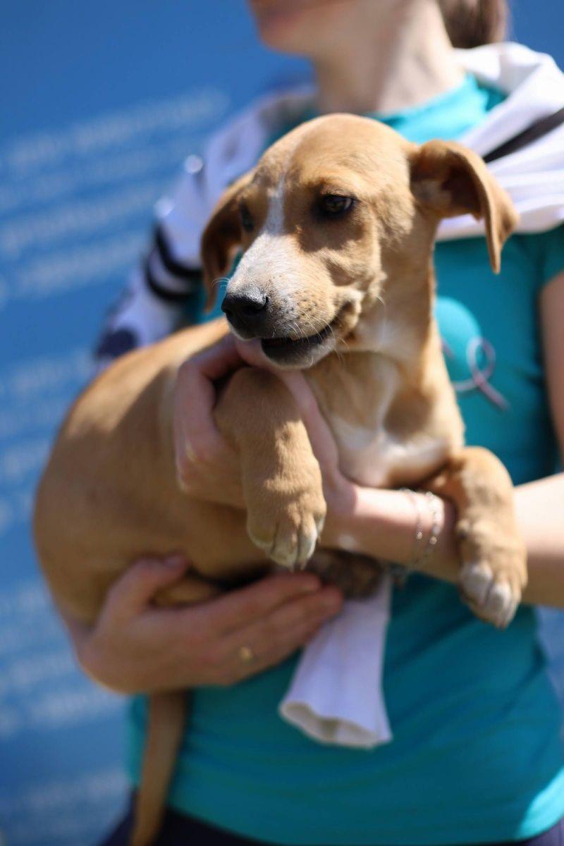 Рой, 6 месяцев, собачка собаки, щенки собака приют собак отдам собаку