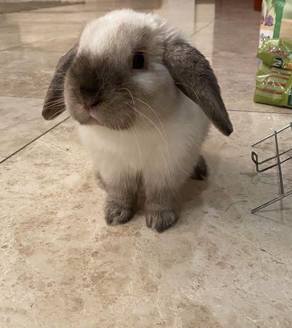Вязка кролика, мальчик, бесплатно