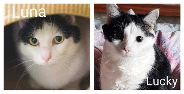 Kocie rodzeństwo szuka wspólnego domu