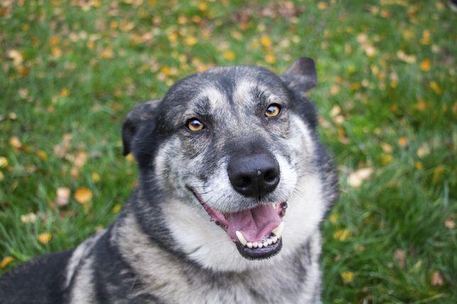 Leo - cudowny pies, który nie ma szczęścia, do adopcji