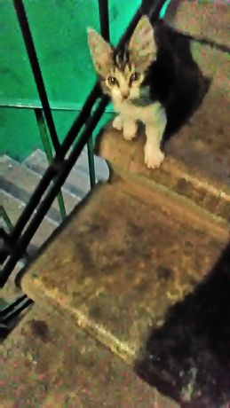Ласковый котенок ищет свой дом