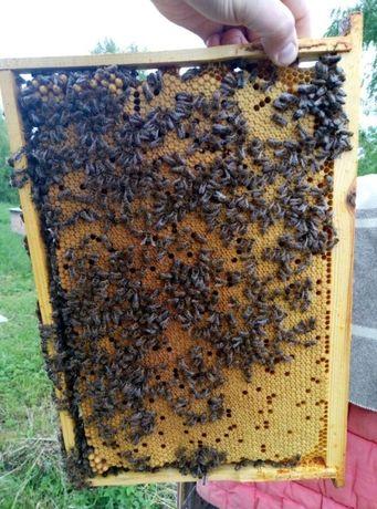 Пчелопакети 1100 грн
