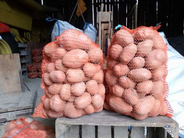 Ziemniaki sadze Bellarosa 6zł za woreczek 15kg