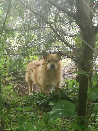 Psiak szuka bezpiecznego schronienia