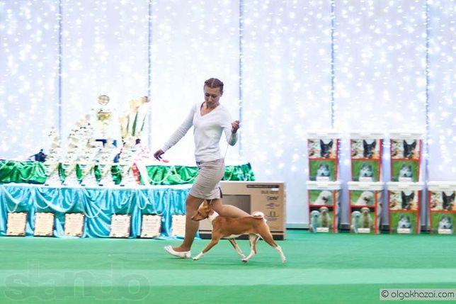 Услуги Хендлера - Профессиональная подготовка собак к выставкам