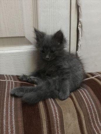 Котёнок девочка кошка