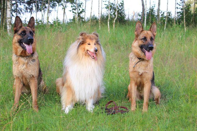 Гостинница для собак( передержка)
