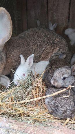 Мальчики и девочки кролики кроли