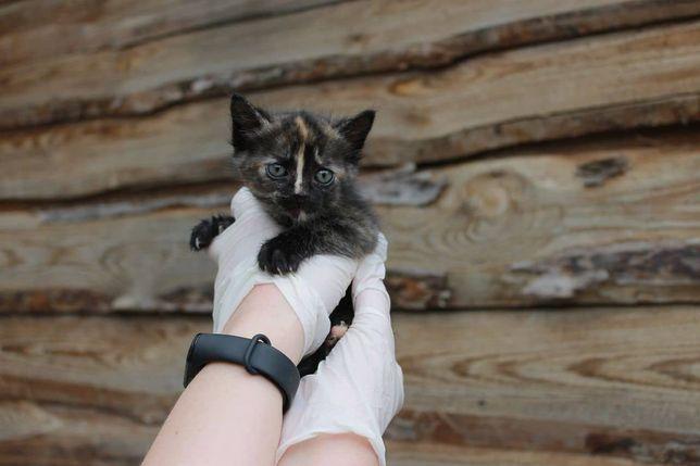 Моника в поиске дома котенок кошеня кот кошка