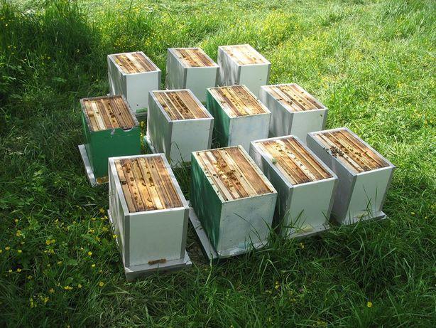 Odkłady pszczele rodziny pszczoły