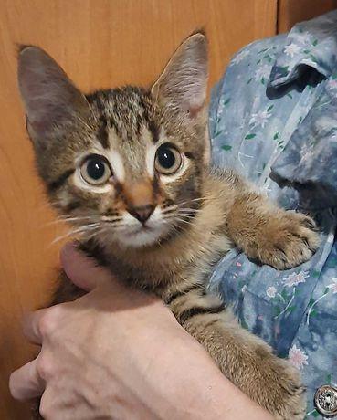 Ласковый очень милый котенок в хорошие руки. Сами доставим