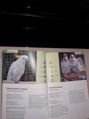 Продам книгу про попугаев
