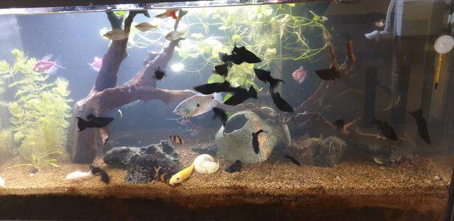 Sprzedam AKWARIUM z rybami 112 L. bardzo ładne!