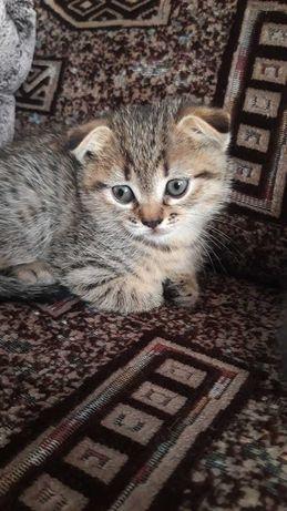 Милые котятки полукровки ищут новый дом!