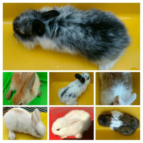 Декоративные крольчата мини
