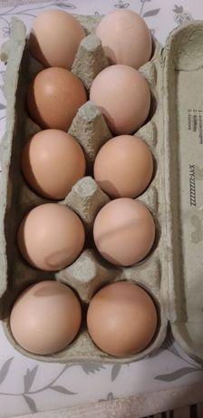 sprzedam jaja wiejskie.