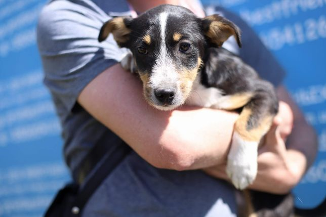Маленький щенок 6 месяца Тоффи собака, собачка щеня
