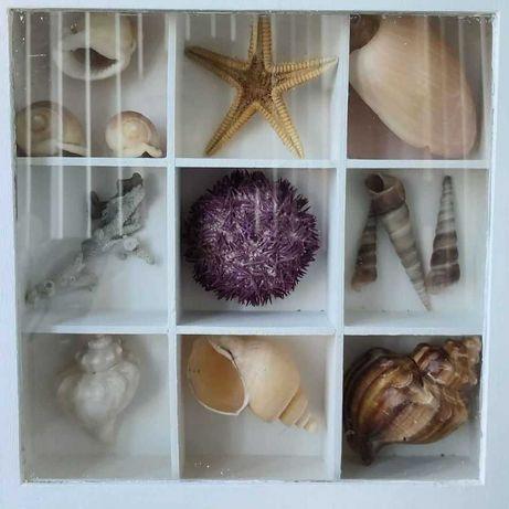 Expositores / Quadros / Caixas com conchas, búzios. (Ler descrição)