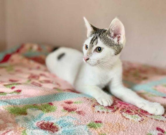 Pralinka - cudowna kocia dziewczynka w osamotnieniu czeka na dom...