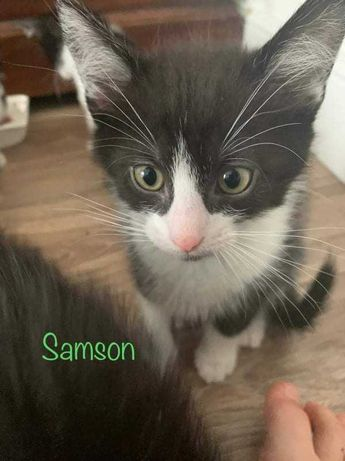Samson szuka domu
