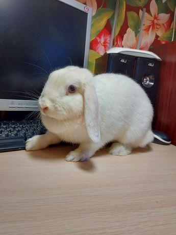 Декоративный кролик кроль клетка для кроля