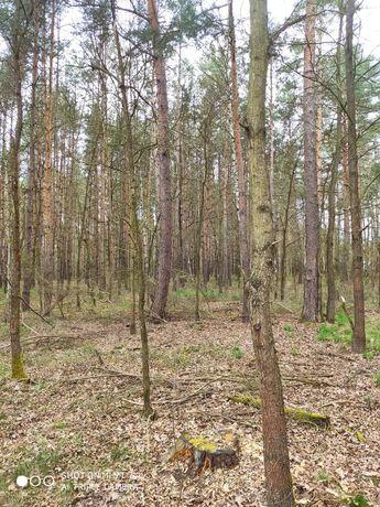 Sprzedam las o powierzchni 1.33 ha. Ożegów