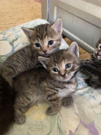 Котята, ищут любящую семью