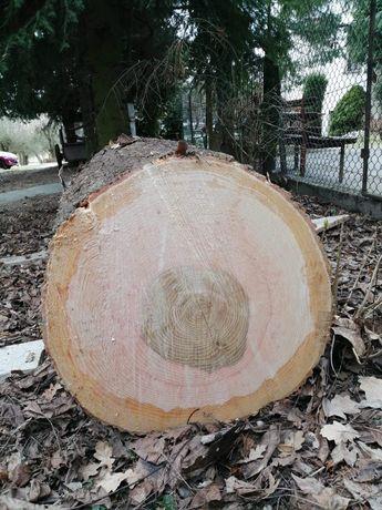 Jesion dłużyca Klody w kawałku Drzewo tartaczne