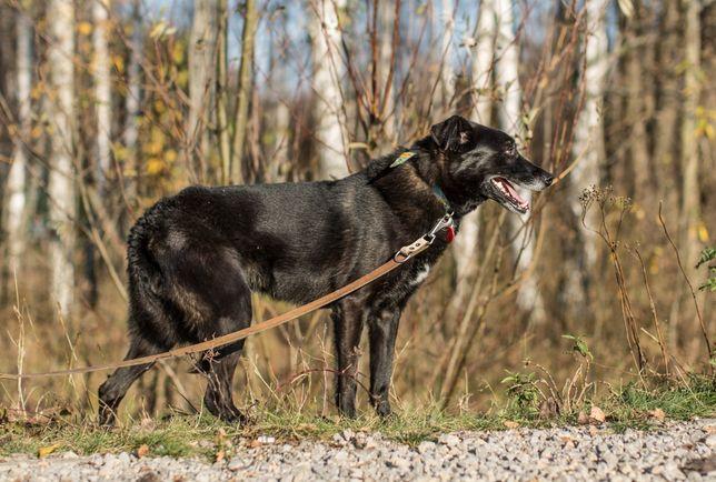 Garo, od szczeniaka w schronisku, szuka odpowiedzialnego domu