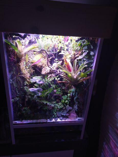Belka oświetleniowa power LED 10*3W fullspectrum do roslin wiwarium 30