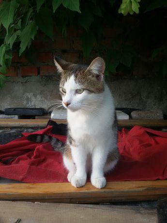 Отдам кота лесного окраса, 2 года, кастрирован