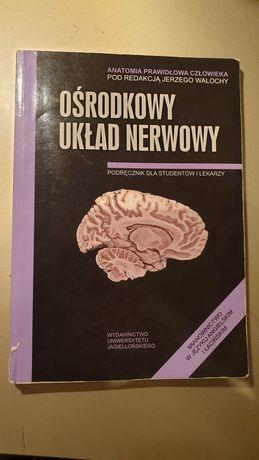 Skawina anatomia ośrodkowy układ nerwowy OUN Walocha