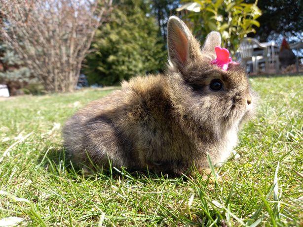 Króliczek królik króliki miniaturka TEDDY KARZEŁEK WYPRAWKA gratis