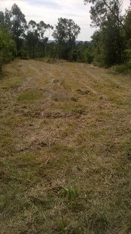 Terreno Rural Agrícola em Alfarelos