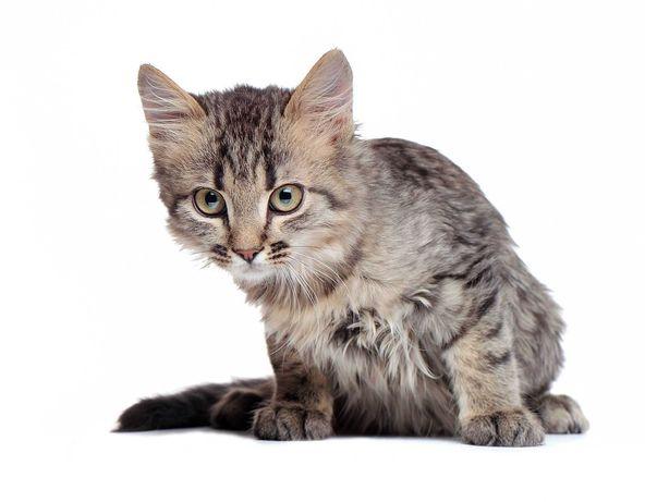 Котенок Рыся 4 месяца