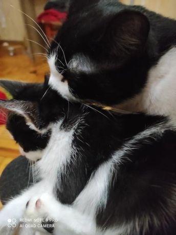 Котик і кошеня в добрі руки
