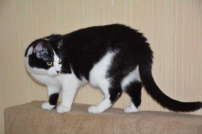 Молодой котик (1год) в поисках ДОМА
