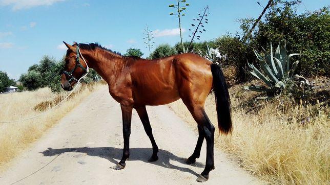 Vendo ou troco cavalo muito manso com 3anos com 169 de altura