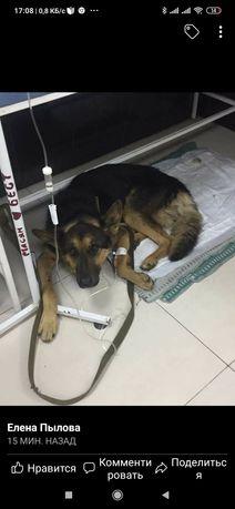 Пропала найдена собака Бабурка